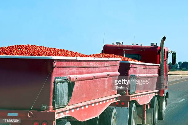 tomato harvest being hauled to cannery by truck