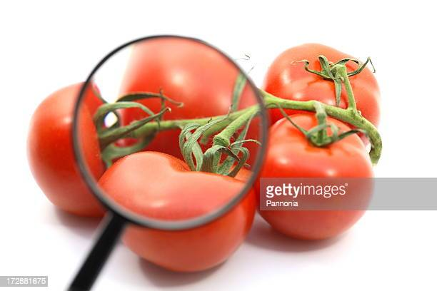 Tomatoes and Magnifier