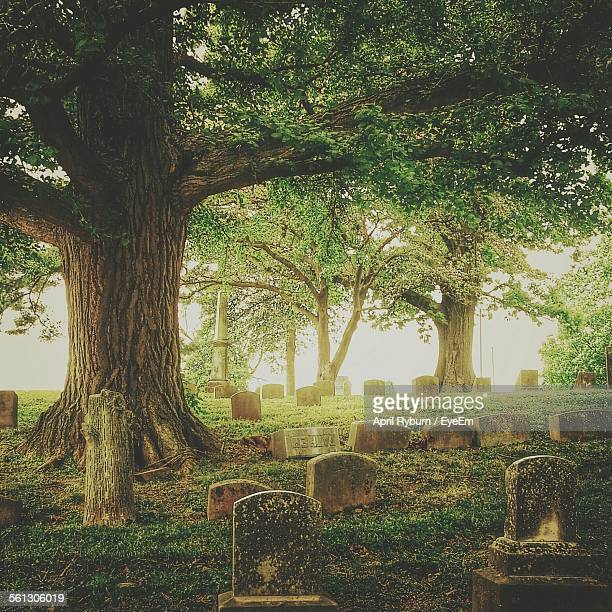 Tombstones And Trees In Cemetery