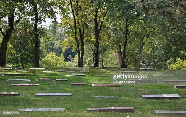 Tombstones At Cemetery in a wooded area