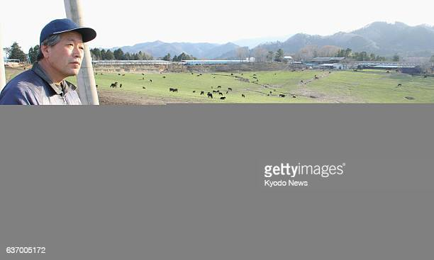 Tomioka Japan Masami Yoshizawa stands by beef cattle on April 2 in his 'Farm of Hope' in a nuclear falloutcontaminated area in Fukushima Prefecture...