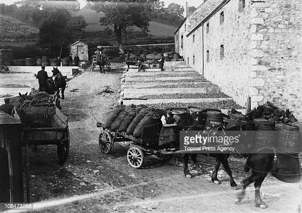 Tons of apples are delivered by horsedrawn cart to be stored in the pound at Henley and Sons cider works Newton Abbot Devon 1908