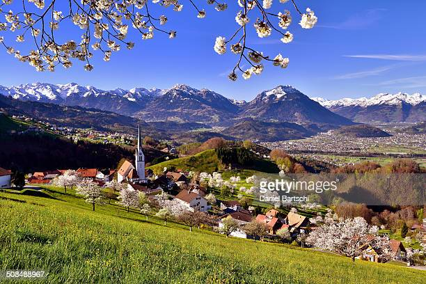 Tonscape of Fraxern with blooming cherry trees and views of the St. Gallen Rhine Valley, Fraxern, district of Feldkirch, Vorarlberg, Austria