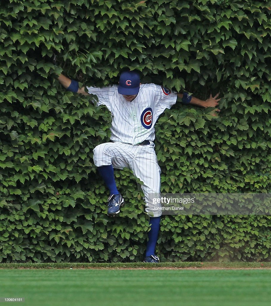 Tony Campana #41 of the Chicago Cubs falls into the ivy after making a catch against the Cincinnati Reds at Wrigley Field on August 5, 2011 in Chicago, Illinois.