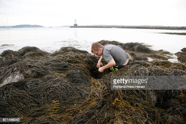 Tony Reiling of New Gloucester searches for creatures along the tidal area at Fish Camp in South Portland The husband and wife team of Jeff and Deb...