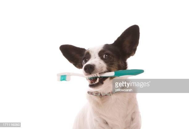 Escova de Dentes de Cão