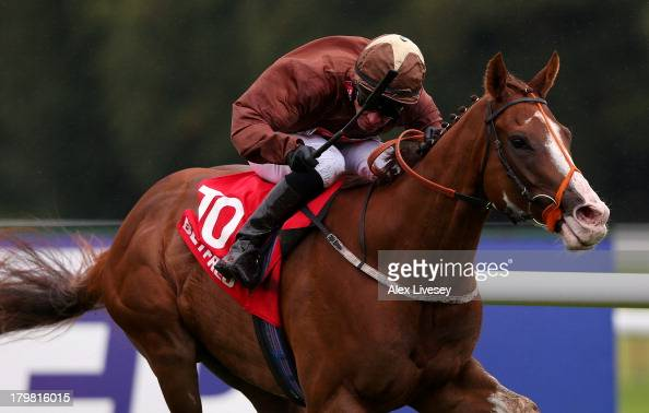 Top Notch Tonto ridden by Dale Swift wins The Betfredcom Superior Mile held at Haydock Racecourse on September 7 2013 in Haydock England