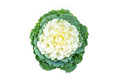 Top view Brassica oleracea viridis vegetable in bag on white background and clipping path