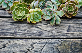 Top view cute succulent plant flora with copy space for text on wooden table background.