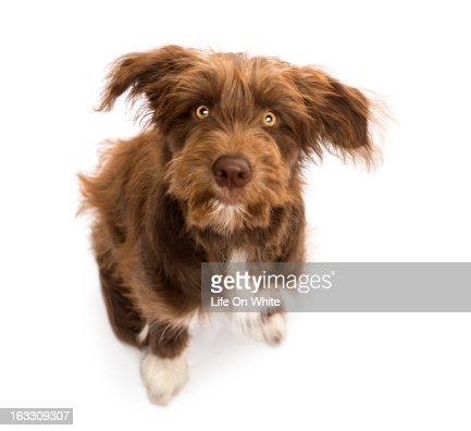 Top view of Crossbreed sitting : Stock Photo