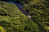 Top View of River in Rainforest