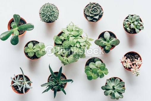 top view of various green succulents in pots on white : Stock Photo