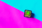 Top view small green cactus plant in pot isolated on a pink and blue sky background. Copy space