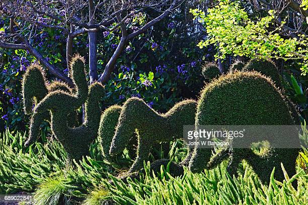 Topiary, Botanical Gardens Melbourne