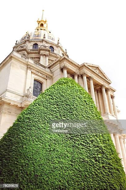 Topiary bush obscuring Church Saint-Louis des Invalides, Paris