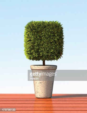 Topiary cube plant