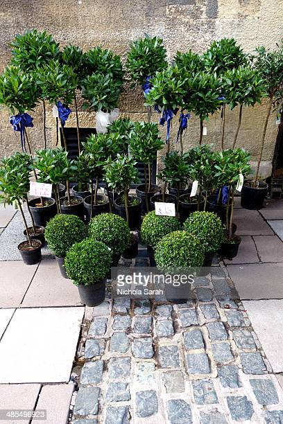 Topiary for sale