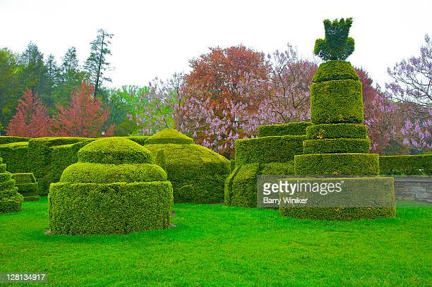 Topiary garden with pyramid-like shrubery, Longwood Gardens, Kennett Square, Pennsylvania