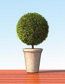 Topiary sphere plant