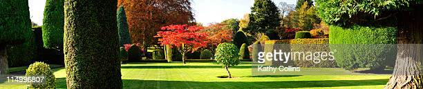 Topiary trees in a garden