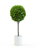 Topiary trees in the pot isolated on white background. 3D Rendering, 3D Illustration.