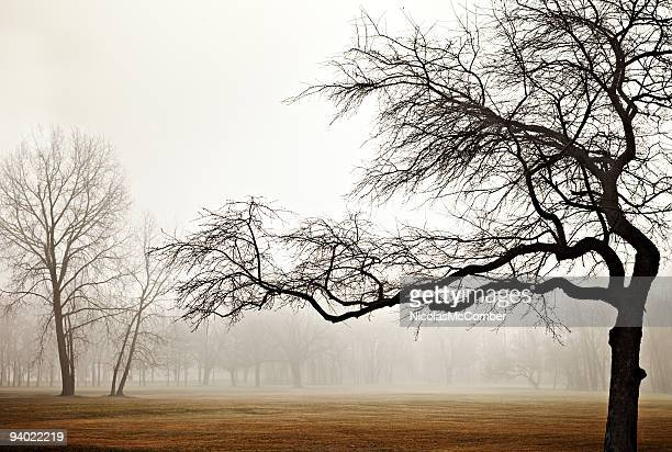 Tormented tree silhouette against foggy park