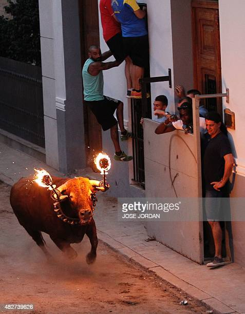 A 'Toro embolado' with balls of flammable material attached to its horns charges down a street during a 'Pena Taurina' where bull fighting...