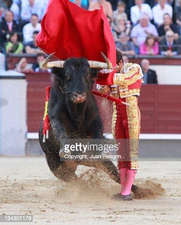 Toro, salto : Stock-Foto