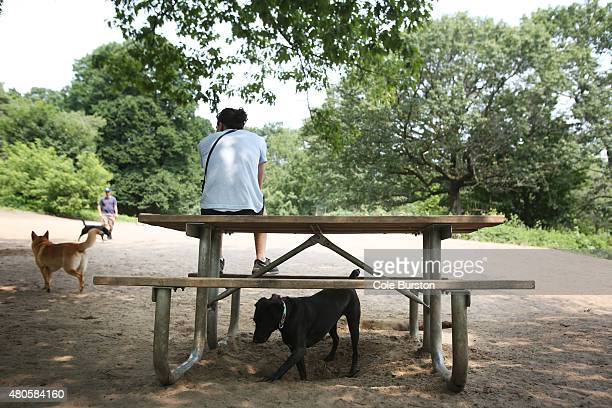 Toronto Canada July 4 A dog plays under a picnic bench at the offleash dog park in Toronto's High Park on July 4 2015 Cole Burston/Toronto Star