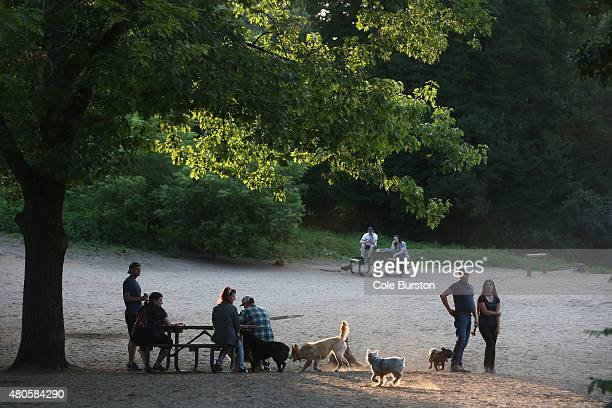 Toronto Canada July 4 Dogs play in a patch of sun at the offleash dog park in Toronto's High Park on July 4 2015 Cole Burston/Toronto Star