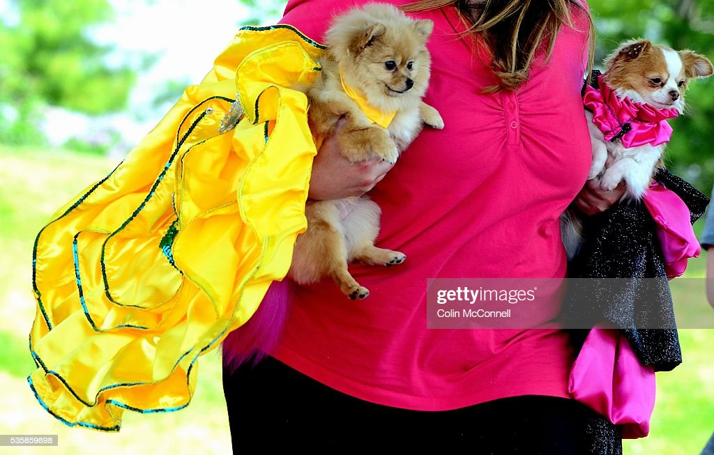 Toronto May 28th 2016 Woodbine Park Woofstock celebrates its 13th year with fashion shows and much more....... A couple of dogs with their fancy dresses for the fashion show