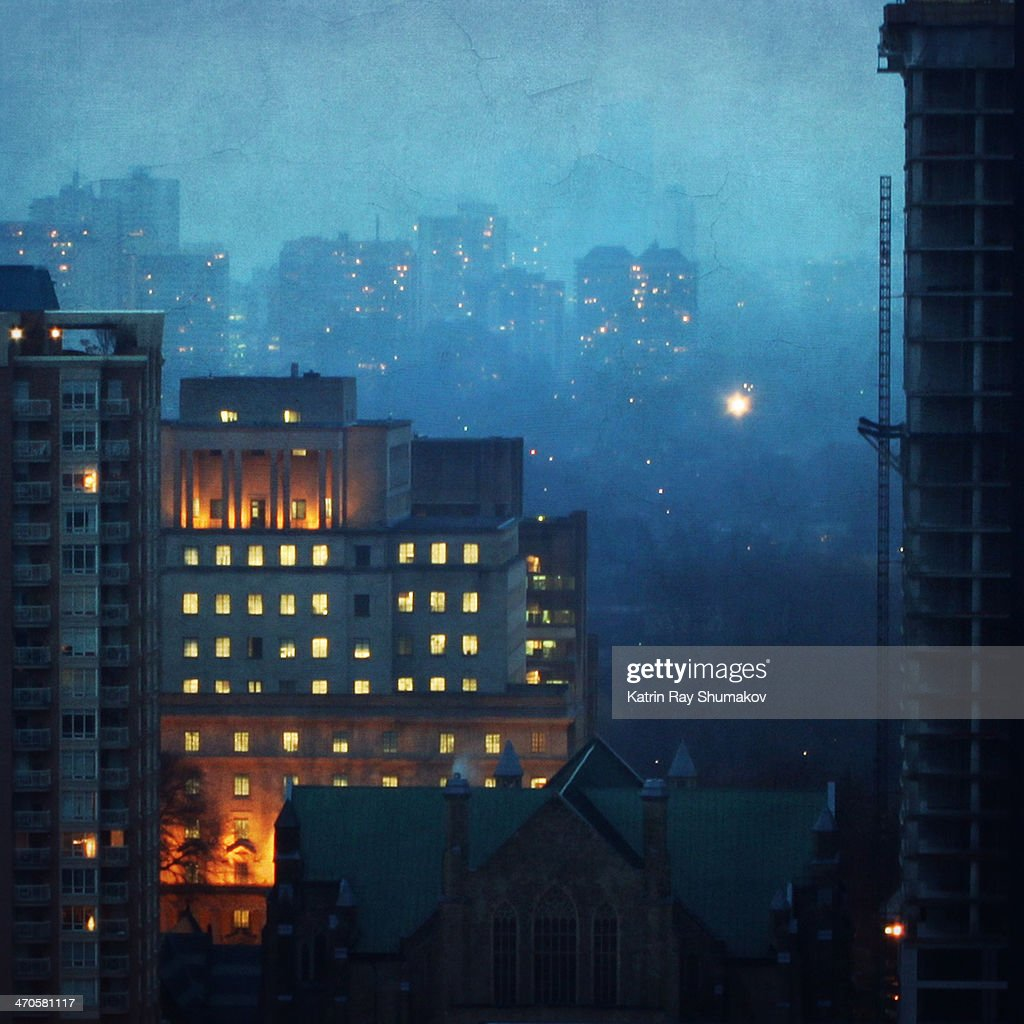 Toronto's Mixed Forest. Blue Mist of December : Stock Photo