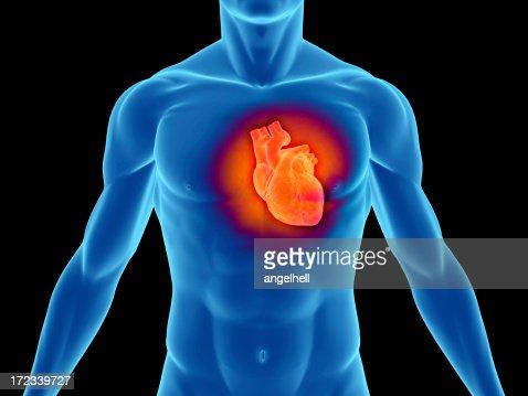 Torso of a man highlighting the heart