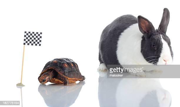 tortoise and hare at checkered flag focus on turtle