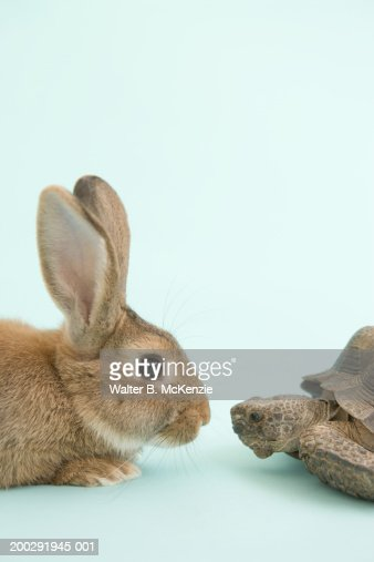 Tortoise and Hare, face to face