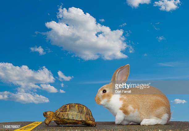 Tortoise and Hare, Finish Line