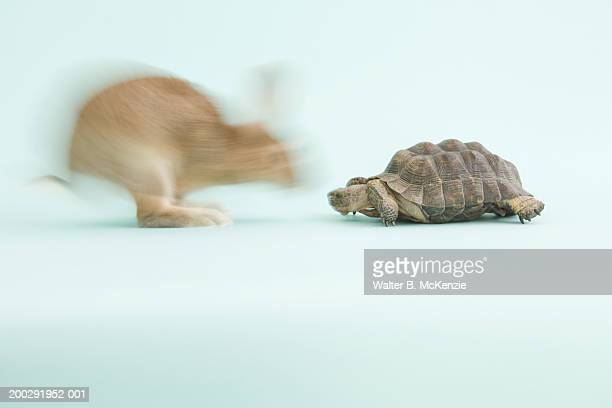 Tortoise and Hare (blurred motion)