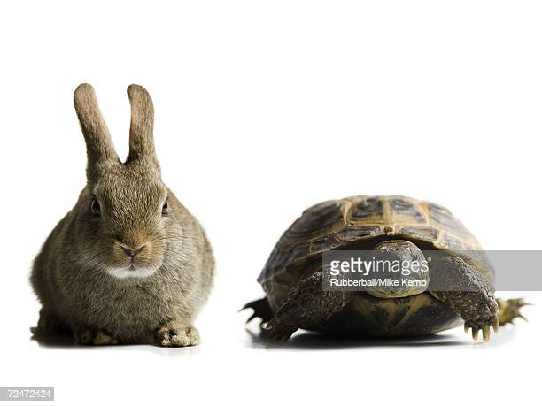 Tortoise and hare racing