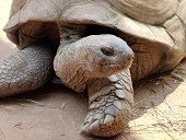 tortoise in nature background