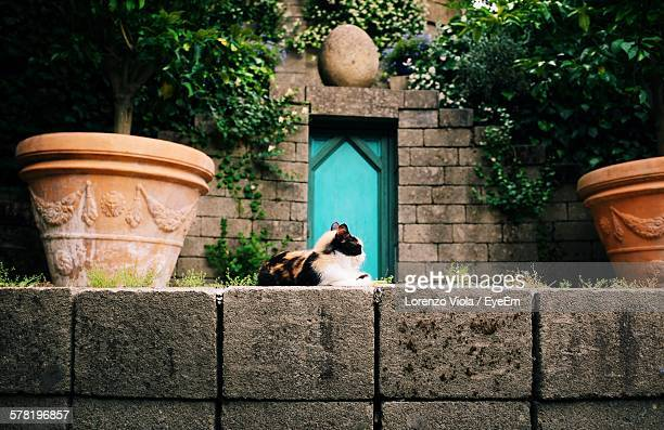 Tortoiseshell Cat Resting On Retaining Wall