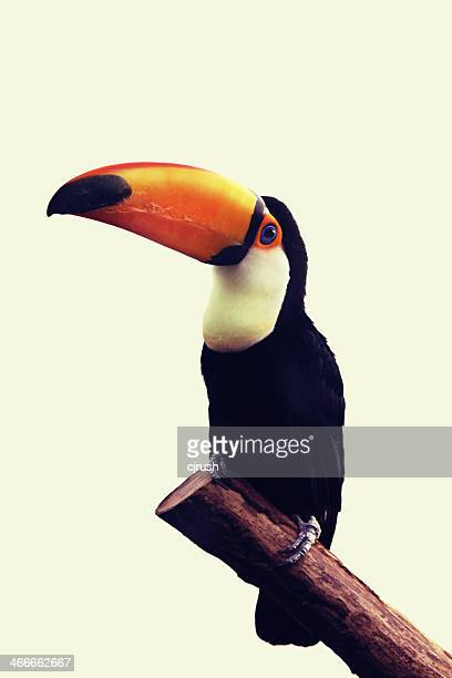 Toucan glance