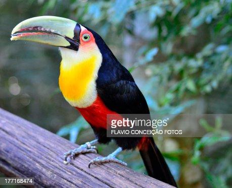 Toucan-Chickpea-green