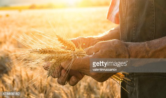 Touching the harvest