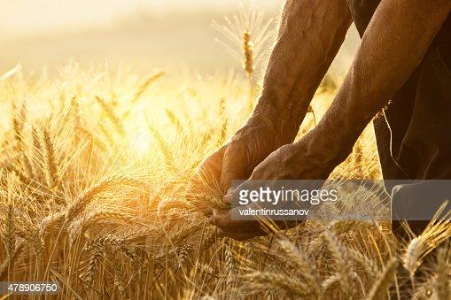 Toucher le harvest