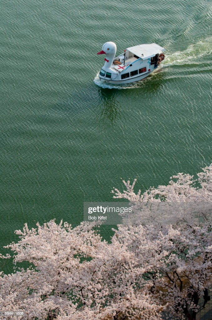 Tour boat on lake lined with cherry trees