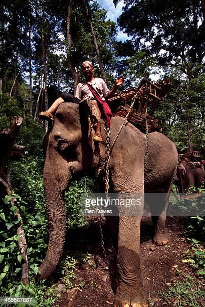 A tour guide rides an elephant through the lush forests near the Karen village of Baan Meung Phen in Mae Hong Son Northern Thailand Elephant Trekking...