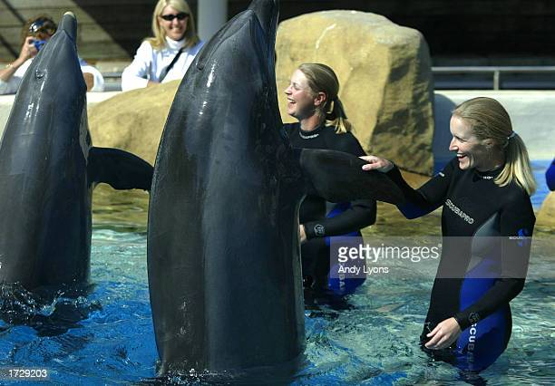 Tour players Janice Moodie and Charlotta Sorenstam shake with dolphins during the Trainer for a Day Program on January 16 2003 at Sea World in...