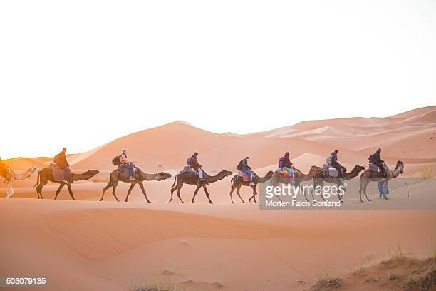 CONTENT] Tourist camel caravan crossing the Moroccan Sahara in February during a beautiful sunrise