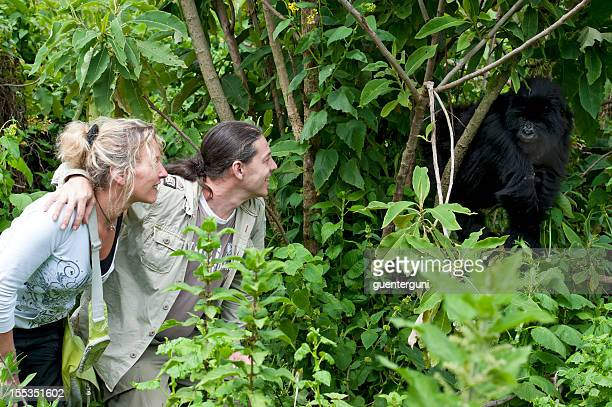 Tourist couple next to a juvenile Mountain Gorilla, wildlife shot
