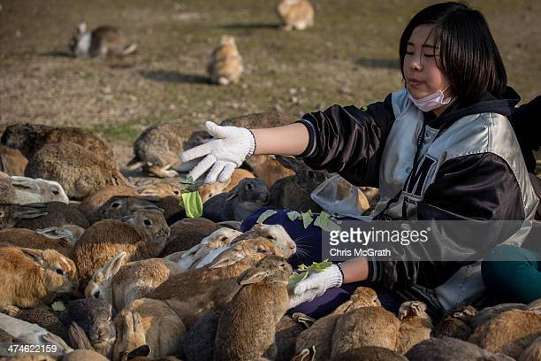 A tourist feeds hundreds of rabbits at Okunoshima Island on February 24 2014 in Takehara Japan Okunoshima is a small island located in the Inland Sea...